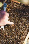 Mayer Honig die Honigwelt in Gleinstätten