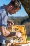 Bienen-Honig Mayer – Gleinstätten Steiermark
